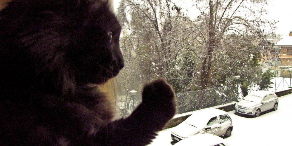 Mai innamorarsi di un fiocco di neve Michela Chessa